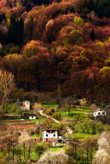 The spring's vivid colors in the Rhodope Mountains